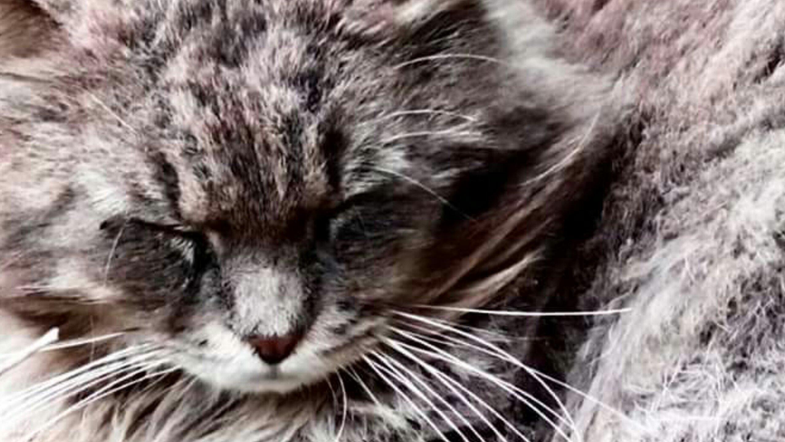 etiliyle-luca molinari photo-sleeping cat-101790036..png