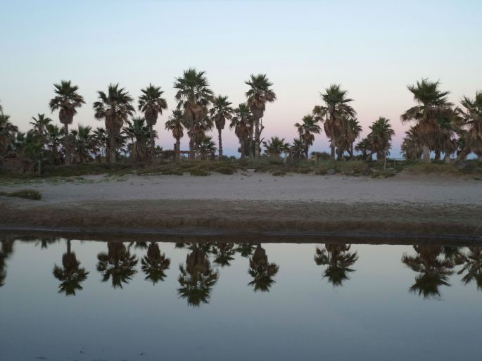 Etiliyle-Luca Molinari photo- mirror palms at beach